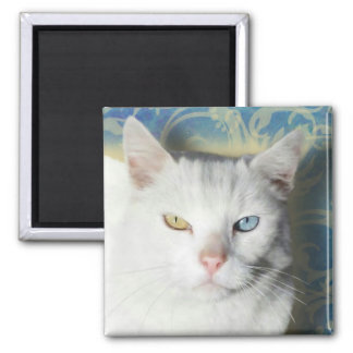 Cat - Patrick the White Cat Refrigerator Magnets