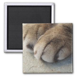 Cat Paws Magnet