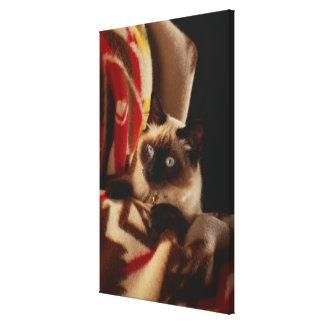 Cat peeking through quilt canvas print