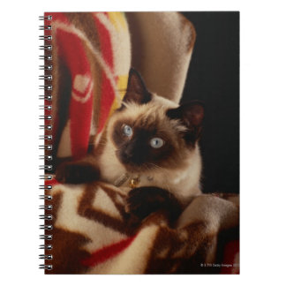 Cat peeking through quilt notebooks
