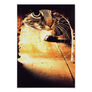 Cat Peering Into Mouse Hole Poster