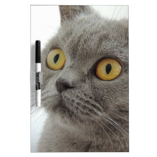 Cat Pet Animal Grumpy Frown Peace Love Destiny Dry Erase Board