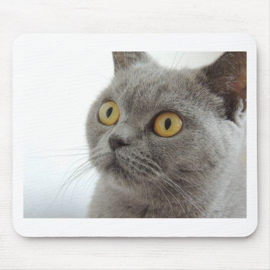 Cat Pet Animal Grumpy Frown Peace Love Destiny Mouse Mat