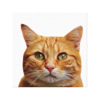 Cat pet animal photo nursery kids room canvas print