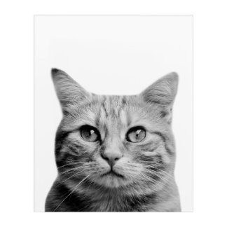Cat pet animal photography black and white acrylic print