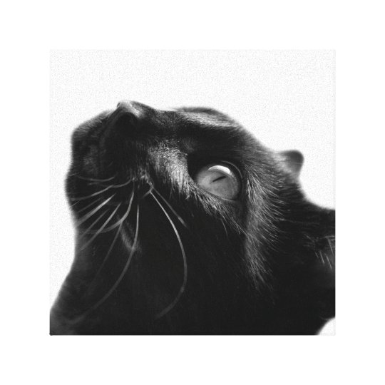 Cat pet cute animal photo black and white
