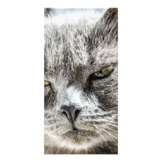 cat photo greeting card