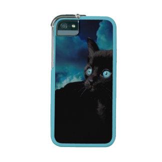 Cat photo cute kitten unique iPhone 5s 5 case Case For iPhone 5