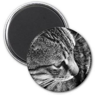 Cat Photo Magnet
