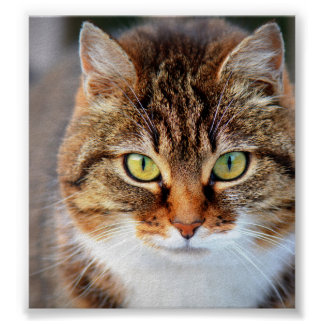 Cat Photo Poster