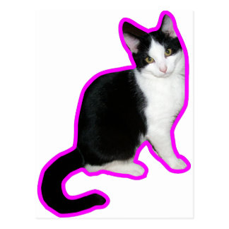 Cat pink outline postcard