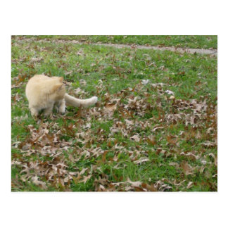 Cat Playing in the Leaves Postcard