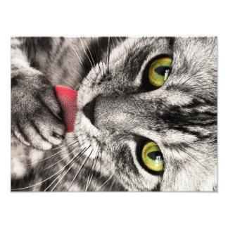 Cat Portrait Art Photo