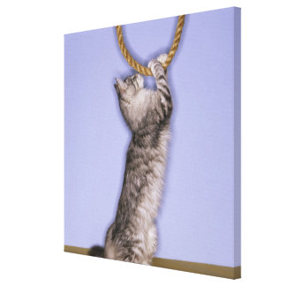 Cat reaching for rope canvas print