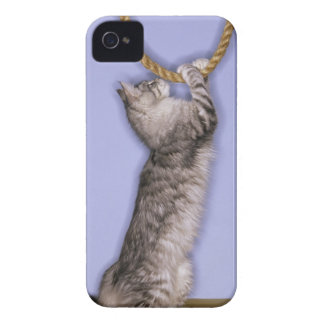 Cat reaching for rope Case-Mate iPhone 4 case
