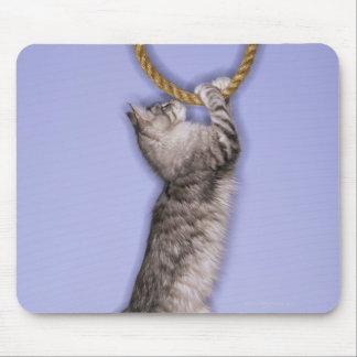 Cat reaching for rope mouse mat