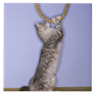 Cat reaching for rope tile