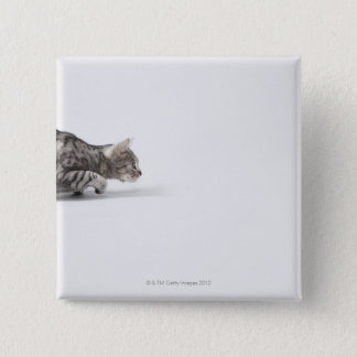 Cat ready to pounce 15 cm square badge