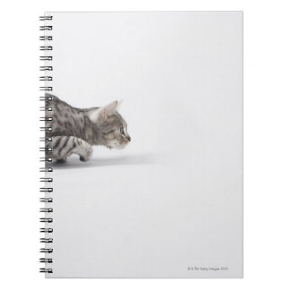Cat ready to pounce notebooks