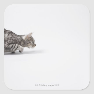 Cat ready to pounce square sticker