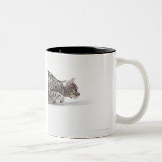 Cat ready to pounce Two-Tone mug