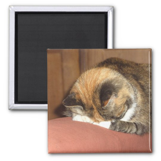 Cat 'Red' sleeping on the cough Square Magnet