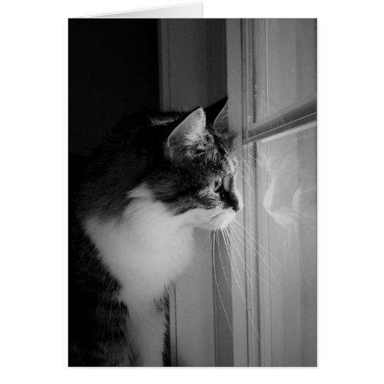 Cat Reflection Blank Greeting Card
