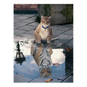 Orange Tiger Cat Gifts Gift Ideas Zazzle Uk