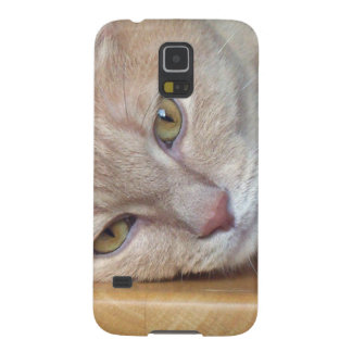 Cat resting galaxy s5 cover