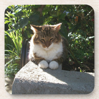 Cat resting on a wall coaster