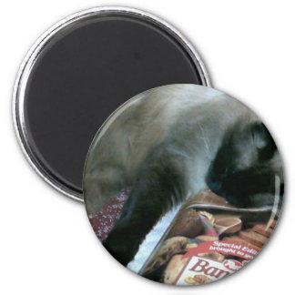 Cat Resting On Cookbook Magnet