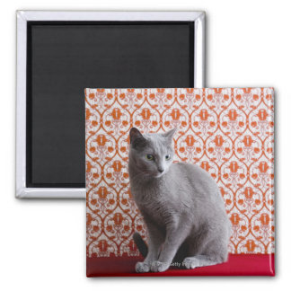 Cat (Russian blue) and wallpaper background Magnet