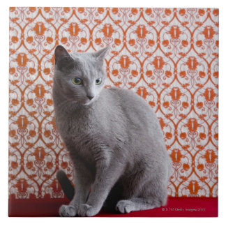 Cat (Russian blue) and wallpaper background Tile