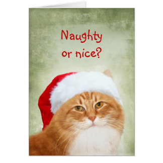 Cat Santa Claus Card