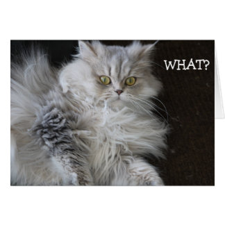 "Cat says ""WHAT?"" - funny Birthday Card"