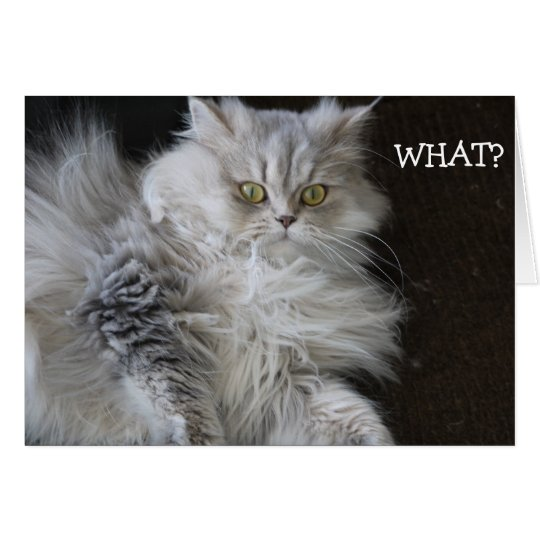 """Cat says """"WHAT?"""" - funny Birthday Card"""