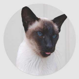 Cat Siamese Portrait Classic Round Sticker
