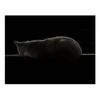 Cat Silhouette Postcard