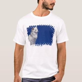 Cat sitting against blue background T-Shirt