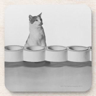 Cat sitting and licking beside pet bowl on white coaster