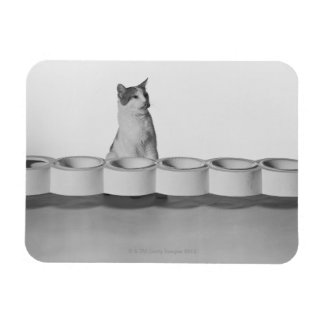 Cat sitting and licking beside pet bowl on white flexible magnet