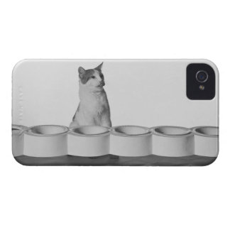 Cat sitting and licking beside pet bowl on white iPhone 4 case