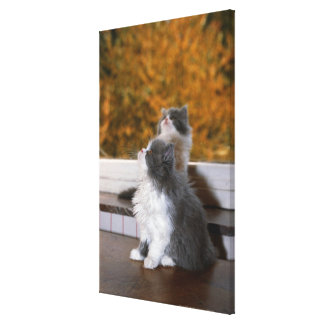 Cat sitting and looking up canvas print