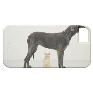 Cat sitting beneath Great Dane iPhone 5 Cases