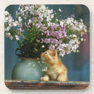 Cat sitting besides flower vase on window sill coaster