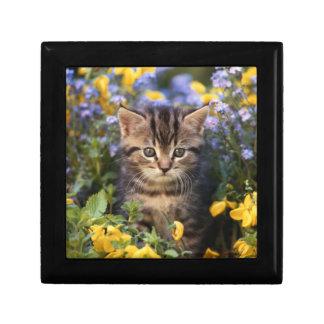 Cat Sitting In Flower Garden Gift Box