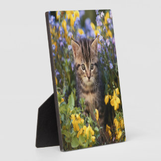 Cat Sitting In Flower Garden Plaque