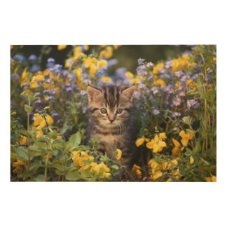Cat Sitting In Flower Garden Wood Print