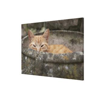 Cat sitting inside urn canvas print