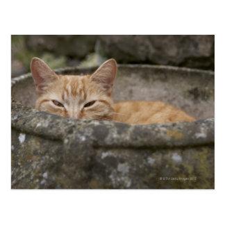 Cat sitting inside urn postcard